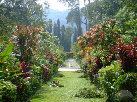 botanical-gardens-in-penang-selangor